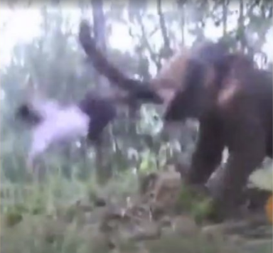 WATCH: Teenage Baahubali ends up in ICU after elephant kick
