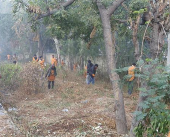 Delhi High Court stays felling of 16,500 trees