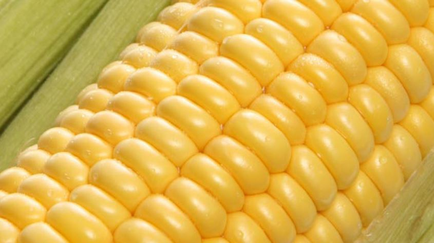 Kaveri Seeds sets up Asia's largest corn cob drying facility in Telangana