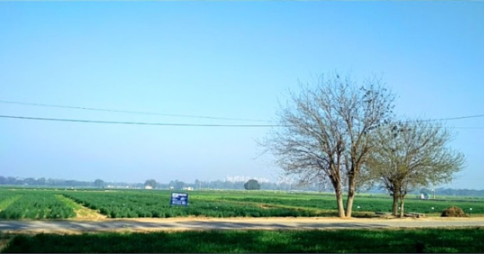 Climate change hurting India's agricultural output – Govt